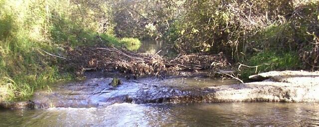 Arroyo Grande Creek Watershed Management Plan